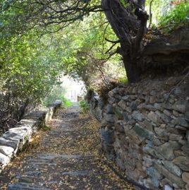 Hiking trail 8 | Apikia – Apatouria – Stenies – Gialia
